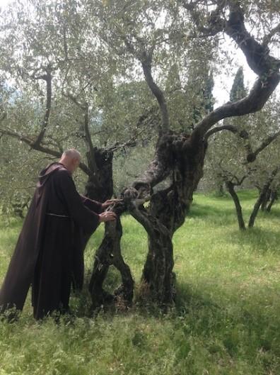 Bruder Wolfgang mit Olivenbaum