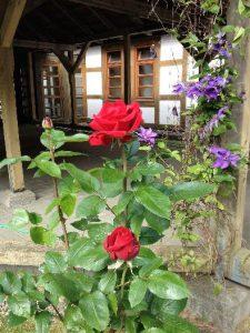 Rose von Weitenhagen